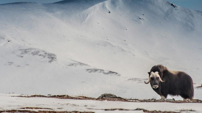 L'ALASKA À TRAVERS L'OBJECTIF D'UNE PHOTOGRAPHE D'AVENTURE